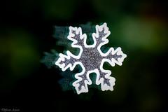 Snowflake - Bokeh (Explored) (Different Aspects) Tags: snowflake christmas decoration macromondays holidaybokeh