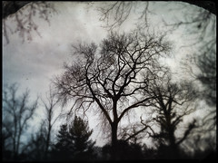 Veil of Winter (Creepella Gruesome) Tags: iphone6splus hipstamatic nature winter trees branches silhouettes spooky phantasm