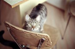 various (finnegan_eins) Tags: voigtländerbessar3a 40mm14 fujisuperia200 soko cat