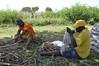 _DSC0179 (HarvestPlus Nigeria) Tags: nff nff2015 nutritious food fair