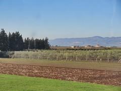 Fields along the railway east of Meknes, Morocco (Paul McClure DC) Tags: morocco fez almaghrib dec2016 scenery meknes fèsmeknèsregion