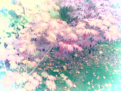 IMG_0260 (starst0rm*<(*?*)>*) Tags: acers trees china