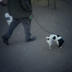 Sniffin' (JEFF CARR IMAGES) Tags: northwestengland towncentres streetlife streetcorner manchester walking w