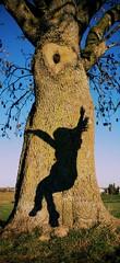 Jumping Shadow (wiedemannmaximilian) Tags: ghost shadow dance dancing fun tree baum baumstamm girl mysterious life living entity