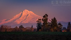 "Did I hear someone say ""Alpenglow on Mount Hood""? (GeoShubin) Tags: oregon mounthood sunset mountain pnw alpenglow trees"