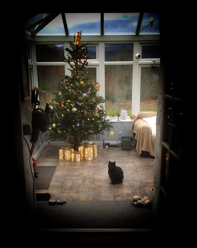 Xmas - tree nd cat