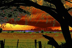Melbourne in the Distance! (maginoz1) Tags: abstract art manipulate luminosity landscapes cloud moon trees skyscape summer january 2017 bulla melbourne victoria australia canon g3x