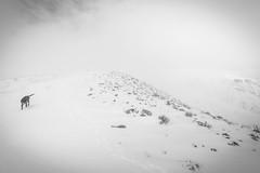 Half mile more (johnwporter) Tags: hiking scramble mountains easternwashington centralwashington washington desert yakimariver canyon yakimaskylineridge pnw upperleftusa northwestisbest 徒步 爬行 山 華盛頓東部 華盛頓中部 華盛頓州 荒漠 雅基馬河 峽谷 雅基馬天際線脊 太平洋西北部 美國左上角 西北部最好 atx116prodx tokinaaf1116mmf28 wideangle wideanglelens 廣角 廣角鏡 labrador blacklab yellowlab 拉布拉多 黑拉不拉多 黃拉不拉多