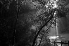 2017-22 (biosfear) Tags: oakland nature jah