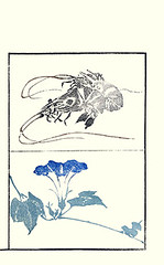 Bottom – Japanese morning glory (Japanese Flower and Bird Art) Tags: flower morning glory ipomoea nil convolvulaceae masayoshi kitao ukiyo woodblock picture book japan japanese art readercollection