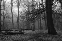 Mono mist (SimonLea2012) Tags: monomonday logs warleywoods bearwood colour life path westmidlands birmingham season winter fog mist woods trees woodland monochromatic mono blackandwhite