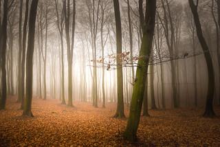 Forest Rügen