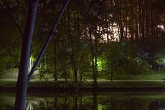 _MG_0832 (annabutova) Tags: nature naturephotography natureonly naturelover night natureinthecity naturelovers nightlight naturephoto natureandnothingelse light
