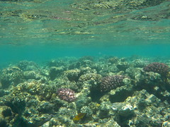 Egyptian Sea (Baz B) Tags: sea fish water coral marine egypt sharmelsheikh egyptian reef