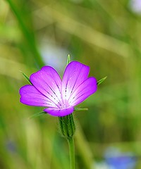 Flower for you (diana.agostini) Tags: