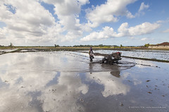 Time to work.. (Shunfa Teh) Tags: blue sky bali reflection water clouds indonesia landscape paddy terrace farm human interest paddyfield