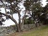Spreading Dogwood (virginia.arboretum) Tags: flower landscape florida scenic arboretum dogwood boyce cornus virginiastatetree