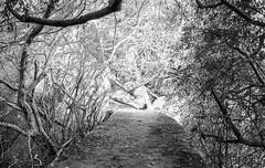 The path after path (glauberpitfall) Tags: brazil blackandwhite film nature wall island dof path analogue guaba riograndedosul ilhadopresdio
