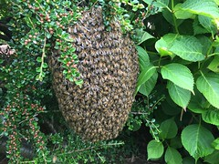 Honey Bees Swarm collection
