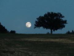 Moon rise in Zocca (Niry Fidelis) Tags: moon rock luna fullmoon moonrise bluemoon lunapiena zocca festadellalibert lunablu