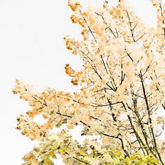 Autumn III (wide-angle.de) Tags: digital germany de top100 top500 treesi y201212 y201212treestop500top100