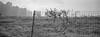 wire netting (飞鸿留影) Tags: xpan hasselblad fujifilm superebc fujinon 45mm 90mm 454 904 35mmfilm film filmphotography analog positive negative negativefilm colorfilm wuxi china blackwhite bw blackandwhite rangefinder fujifilmtx1 nikonsupercoolscan9000ed bokeh streetshot street snapshot