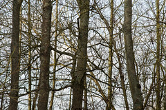20170104-_IMG0984-Edit (fleetingphotons) Tags: pentaxk1 smcpentaxa200mmf28ed wasingestate fishing warrenbeat kennet trees