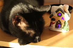 Jack et la petite maison de noël (Livia Coupat) Tags: chat noir maison lumière noël bonhommedeneige violet