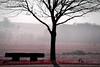 Happy tree ! (Alexandra Kfr) Tags: tree contrast banc bench fields champs nature outside extérieur paysage landscape noir black dark mist brumeux nikon nikkor d3100 70300mm france alsace pink rose red rouge
