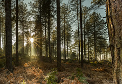 Woodland Burst (Chrissphotos) Tags: trees woods sun light burst colour cold warm fern haze mist soft 5dsr 1635lii canon