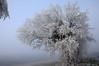 Le réchauffement climatique fait une pause. (bernarddelefosse) Tags: givre brouillard tartaiguille marsanne drôme rhônealpes