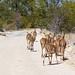 DSC09656 - NAMIBIA 2013