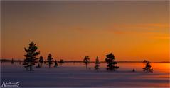 Misty Sunset, Sweden (AdelheidS photography) Tags: adelheidsphotography adelheidsmitt adelheidspictures sweden scandinavia scenery scenic schweden sverige svezia innlandsvägen sunset snow cold canoneos6d colour evening arcticcircle nordic norden north zweden trees mist fog fields