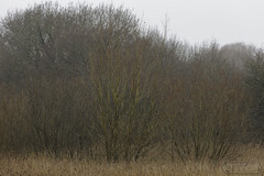 Brandon Marsh 29th January 2017 (boddle (Steve Hart)) Tags: brandon marsh 29th january 2017 steve hart boddle steven bruce wyke road wyken coventry united kingdon england great britain canon 5d mk4 6d 100400mm is usm ii 24105mm standard 815mm fisheyes lens 1635mm l wideangle wide angle 100mm prime macro laowa 15mm f4 11 wild wilds wildlife life nature natural bird birds flowers flower fungii fungus insect insects spiders butterfly moth butterflies moths creepy crawley winter spring summer autumn seasons