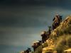 mule train (Jo-H) Tags: grandcanyon mules cowboy americansouthwest arizona sky western littledoglaughed