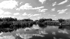 Reflections (BlueisCoool) Tags: flickr foto photo image capture picture photography nikon coolpic l330 reflections cloud sky water pond lake landscape peaceful pretty beautiful nature outdoor outdoors florida skyporn blackandwhite cloudporn trinityflorida