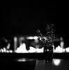 A serene farewell to 2016 (Nobusuma) Tags: homemadesoup selfdeveloped developedathome caffenolc caffenol hasselblad500cm hasselblad 500cm zeiss planar 80mm f28 interior blackandwhite bw biancoenero monochrome ilford panf ilfordpanf 50iso 120 6x6 square flames fire vischio mistletoe farewell2016 happynewyear 2017