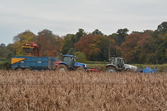 Lamborghini Champion 150 Tractor & Grimme GT170S Potato Harvester filling a Kane Trailer drawn by a New Holland TS115A Tractor (Shane Casey CK25) Tags: lamborghini champion 150 tractor grimme gt170s potato harvester filling kane trailer drawn new holland ts115a ts 115 cnh nh blue silver sdf samedeutzfahr newholland tillage crops cereal cereals golden dust chaff county cork ireland irish farm farmer farming agri agriculture contractor field ground soil earth work working horse power horsepower hp pull pulling cut cutting knife blade blades machine machinery collect collecting crop harvest harvesting harvest16 harvest2016 traktor tracteur traktori trekker trator ciągnik