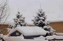 The Backyard (Haytham M.) Tags: cold roof evergreen outdoor trees ontario canada january winter snow
