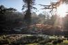 bradgate park - sun (grahamdale74) Tags: xmas 2016 alyssia caitlin chel roy joan wetlands
