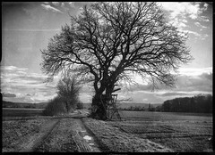(salparadise666) Tags: voigtländer bergheil 9x12 heliar 135mm fomapan 400200 nils volkmer vintage camera drop bed large format nature landscape hannover region niedersachsen germany rural tree