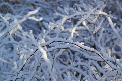 Cover of snow (Steenjep) Tags: vinter winter jylland danmark denmark sne snow herning dof sun sol reflex refleks depthoffield depthoffocus
