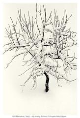 1985 Marostica ( Italy ) - My Analog Archive / La Machine à Remonter Dans le Temps (Angelo Aldo Filippin) Tags: memoriesmachine lamachineàremonterdansletemps veneto italy new angeloaldofilippinphoto photo cool goodtimes fineart blackwhite monotone monochrome bestoftheday picofthpiceday timemachine archivioanalogico analogarchive light italianphotographers popular bw 1985 marostica snow neve