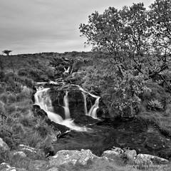 Small falls on Walkhampton Common. (pike head) Tags: uk england olympus devon common dartmoor hdr e30 walkhampton photoengine oloneo