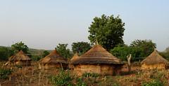 Berecingou (Benin) - Clich Africa (Danielzolli) Tags: africa dorf village pueblo htte afrika benin ky afrique selo paese aldea villaggio natitingou vesnice wie afryka tukul rundhtte  kouand  abakora berecingou bersingou
