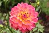 IMG_0865 (courtneymattson98) Tags: pink yellow canonrebel longwoodgarden almostmissedit courtneytheshutterbug