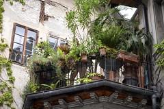 In Explore - Jardin suspendu en ville, Fribourg, Suisse (Aruna's world) Tags: plants terrace terrasse explore fribourg plantes terracedgarden jardinsuspendu d5100 arunasworld ruedespouses