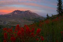 Waiting (NW Vagabond) Tags: flowers sunset volcano waiting pacific northwest cascades mountsthelens range paintbrush mtsthelens active mtsainthelens