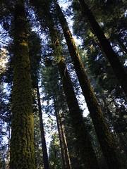 (Gilles LEFEUVRE) Tags: california summer sky usa mountain apple nature montagne holidays ciel yosemite nuages paysage parc paysages fort californie iphone 2014 etatsunis yosemitepark parkyosemite
