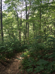 forest (Molly Des Jardin) Tags: park trees usa green forest state pennsylvania path sunny lancaster 2014 susquehannock drumore iphone5sbackcamera412mmf22